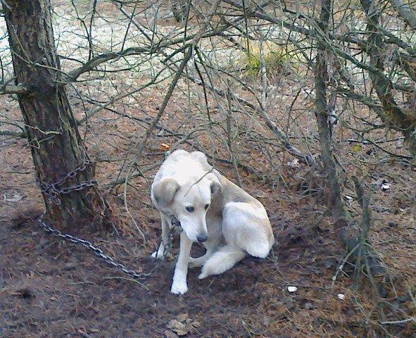 Pies w lesie.jpg