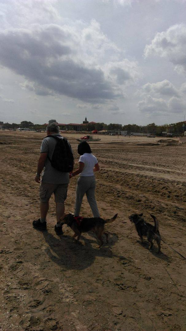 Psy na plazy1.jpg