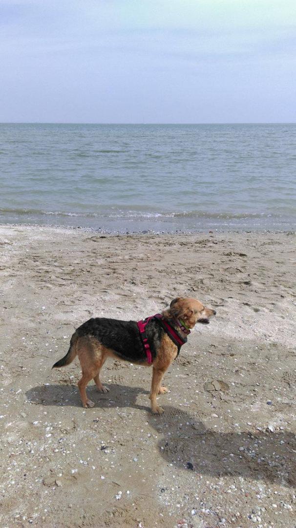 psy na plazy2.jpg