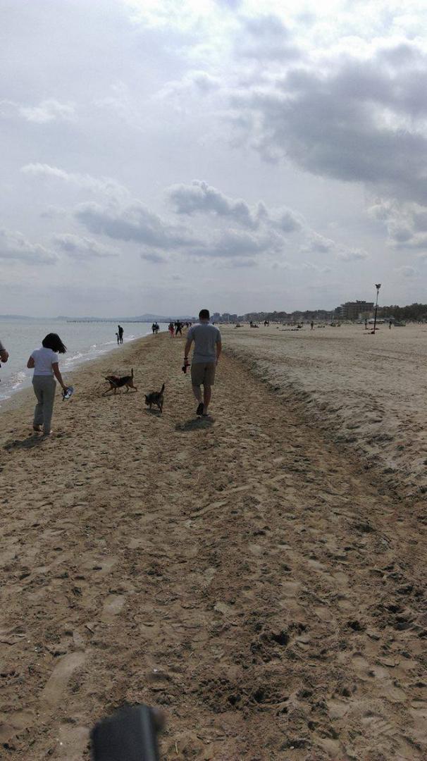psy na plazy3.jpg
