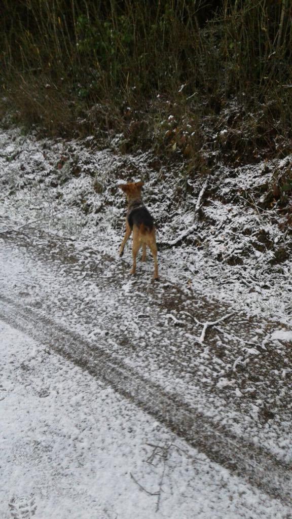 Hopka na sniegu.jpg