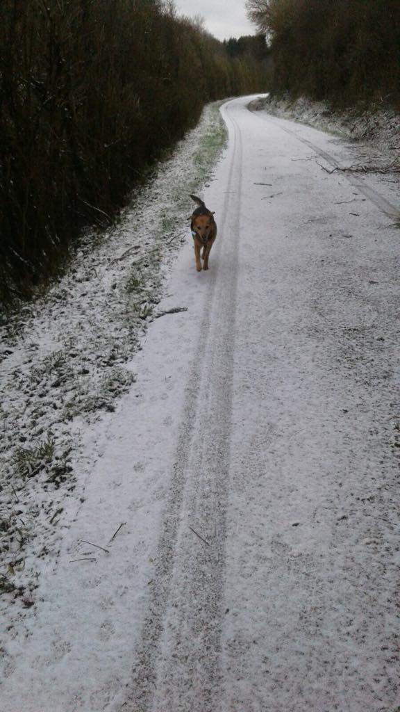 Hopka na sniegu2.jpg