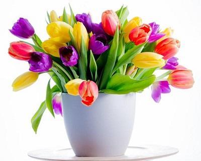 2126175900_kwiatki14.jpeg.26b6e1969c868354ee8813a20fa24b5a.jpeg