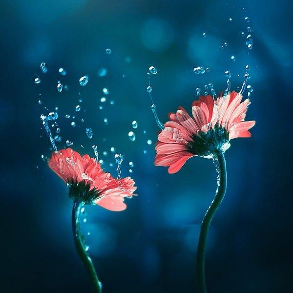 flower-stories-02.jpg