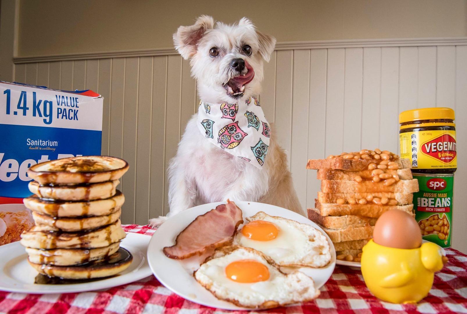 victorian-dog-rescue-spring-into-spring-breakfast-11.thumb.jpg.b9ee3044fd7e5c74b821cfb1da8f2f29.jpg