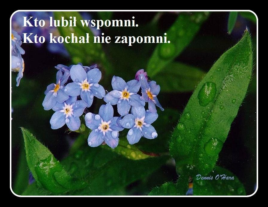 kwiaty151.jpg