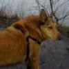 Gdy atakuje inny pies... - ostatnich postów przez Margo3011