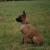 Aport-szkolenie psów
