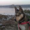 Psu nudzi się każde jedzenie - ostatnich postów przez szmig