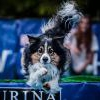 Psie zabawkowe hity - ostatnich postów przez Dogha