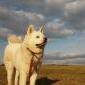 Uwaga na hodowle wilcze ser... - ostatnich postów przez Miawko
