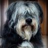 Sprzedam/oddam/kupię psie a... - ostatnich postów przez Katarzyna90