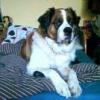 psy znalezione w lesie - ostatnich postów przez asz26