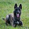 Psie blogi - ostatnich postów przez Furie